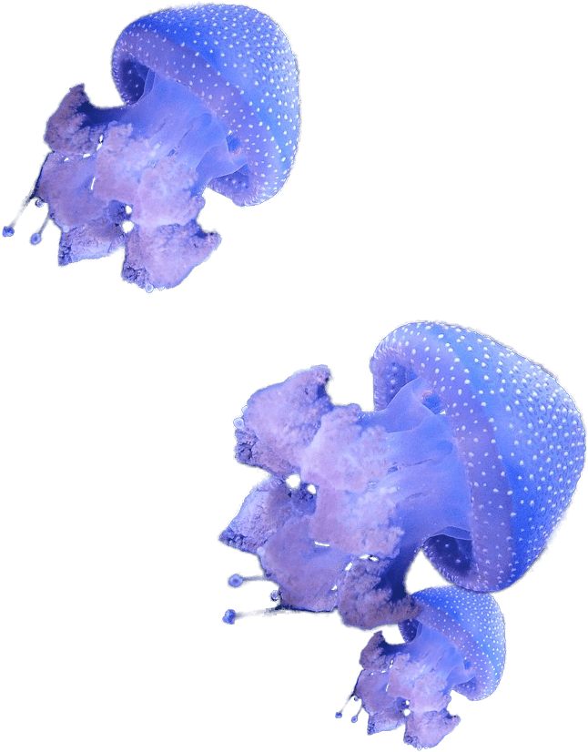 Jellies Swimming